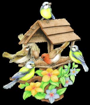 Index Of Users Tbalze Bird Feeders