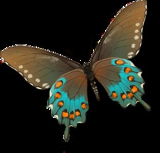 Výsledok vyhľadávania obrázkov pre dopyt png gif motýle