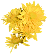 Yellow Flower Illustration - Stephanie Elder | Stephanie Elder